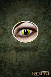 Cat Eyes Yellow